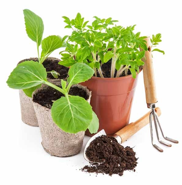 organic potting plants